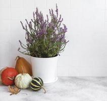 composición creativa del día de acción de gracias de otoño otoño con calabazas naranjas decorativas foto
