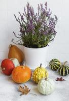 Creative autumn fall thanksgiving day composition with decorative orange pumpkins photo