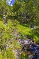 agua corriente de una pequeña cascada hermosa río, vang, noruega foto