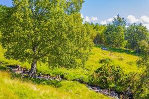 Panorama de paisaje de montaña y bosque en día soleado vang noruega foto