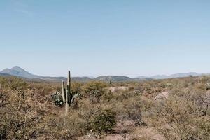 Huge cactus on the grassy hills under the sunlight photo