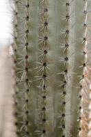 Vertical closeup of a huge cactus with spines under the sunlight photo