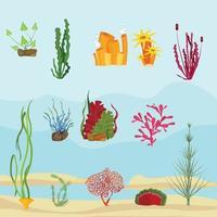 Seaweed underwater wildlife marine botanical plants ocean sea decoration collection vector