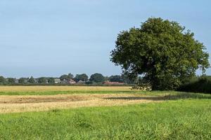 Vistas a los campos rurales de Bishopthorpe Village, North Yorkshire, Inglaterra foto
