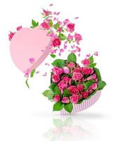 Pink roses flying out of the floating gift box in a heart shape. Isolated on white. Greeting card concept photo