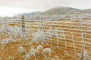 Texas Desert in a Winter Ice Storm photo