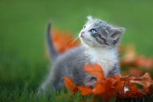 gatitos bebé jugando al aire libre en la hierba foto