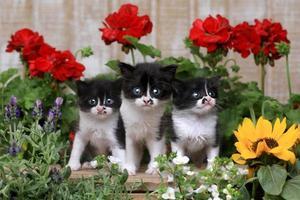 Lindos gatitos bebé de 3 semanas en un jardín foto