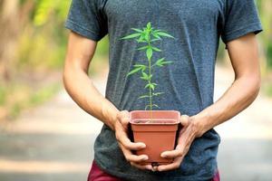 Hand holding marijuana in pod photo