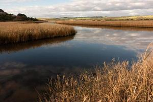 river with golden color grass at princetown wetland photo