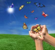 mariposas volando al aire libre hacia el sol foto