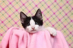 Gatito curioso sobre un fondo rosa suave foto