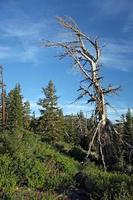 hermoso árbol en la sierra foto