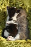 gatitos al aire libre con luz natural. foto