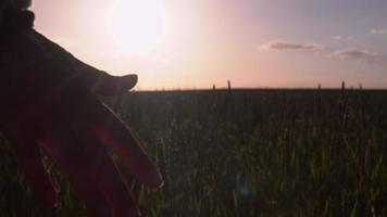 Freedom and loneliness at sunset. video