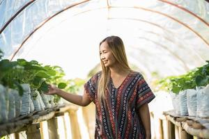 Beautiful farmer woman checking strawberry farm photo