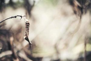 dry leaf branch background photo