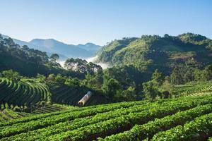 campo de la granja de fresas en la montaña foto