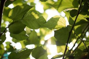 Green leaf in the nature background photo