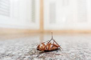 Dead cockroach on floor photo