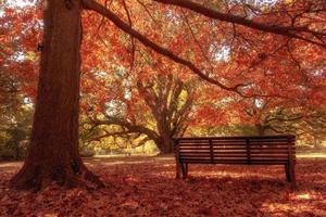 banco de madera en el parque de la ciudad foto