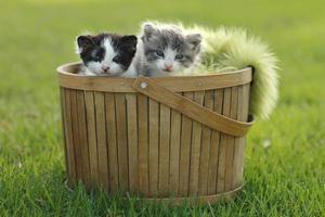 dos gatitos en la canasta al aire libre foto