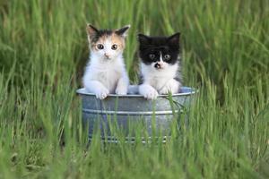 gatitos al aire libre en la hierba verde alta foto