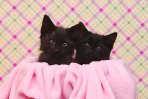 lindos gatitos negros sobre fondo rosa bonito foto