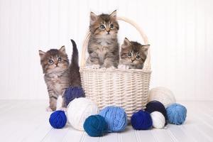 lindos gatitos con ovillos de lana foto