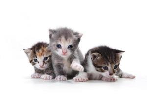 Adorables gatitos recién nacidos sobre un fondo blanco. foto