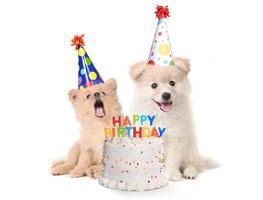 cachorros cantando canción de feliz cumpleaños con pastel foto