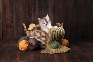 lindo gatito adorable foto