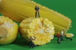 Trabajadores de la construcción en miniatura en imágenes conceptuales de alimentos con maíz foto