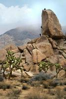 campistas escalada en roca en el parque nacional joshua tree foto