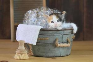 gatito en una bañera con burbujas foto