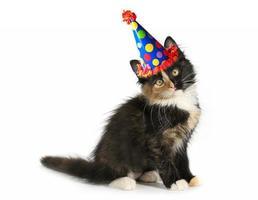 Adorable gatito sobre un fondo blanco con gorro de cumpleaños foto