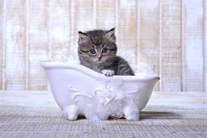 gatito no feliz de tomar un baño de burbujas foto