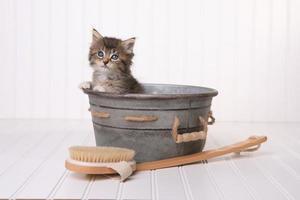 Los gatitos en la tina de lavado se preparan con un baño de burbujas foto