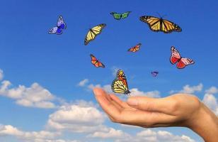 mano sosteniendo mariposas liberadas foto