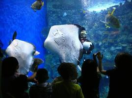 rayos en un acuario gigante con niños mirando foto