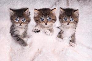 gatitos acostados en la cama con manta foto