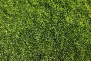 Perfect Green Grass Background or Texture photo