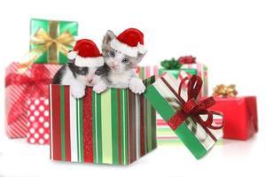 caja de gatitos como regalo de navidad foto