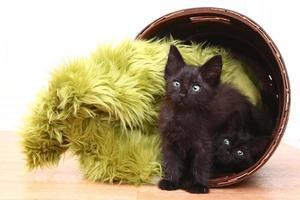 Gatitos curiosos dentro de una canasta en blanco foto