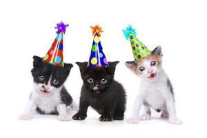 Canción de cumpleaños cantando gatitos sobre fondo blanco. foto