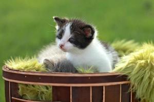 gatito bebé al aire libre en la hierba foto