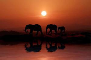 hermosa silueta de elefantes africanos al atardecer foto