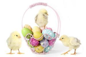 Imagen temática navideña con pollitos y huevos. foto