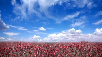 Beautiful Countryside in America photo