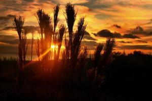 bonita puesta de sol a través del pincel en hawai foto